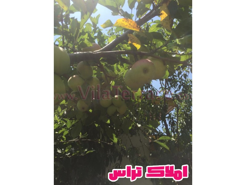 ویلا آمل روستایی 500 متری کد 444