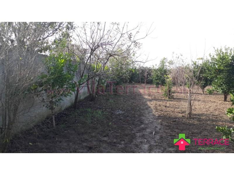 ویلا آمل جنگلی 1390 متری کد 641